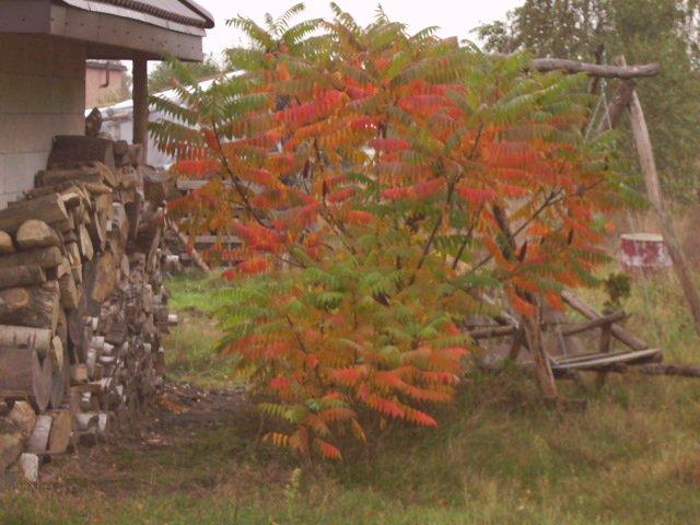 Pierwsze oznaki Jesieni 2008