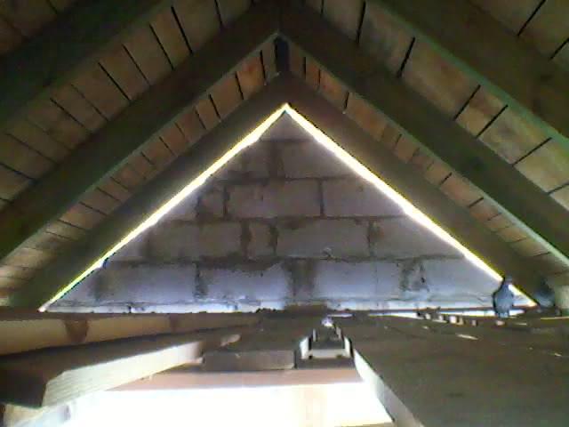 266 SP_A0012 gołębie na strychu.jpg