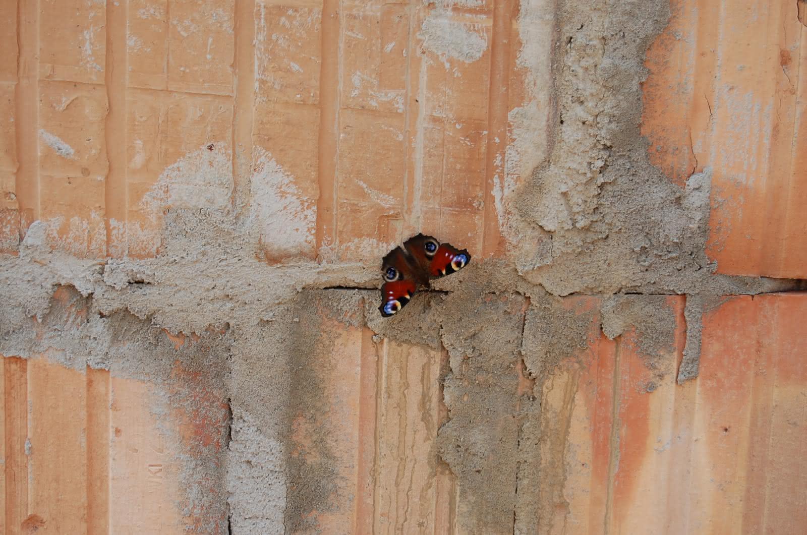 Przyroda Wigierskiego Parku Narodowego :-)