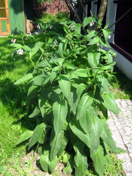 roślina nieznana 1 ;)