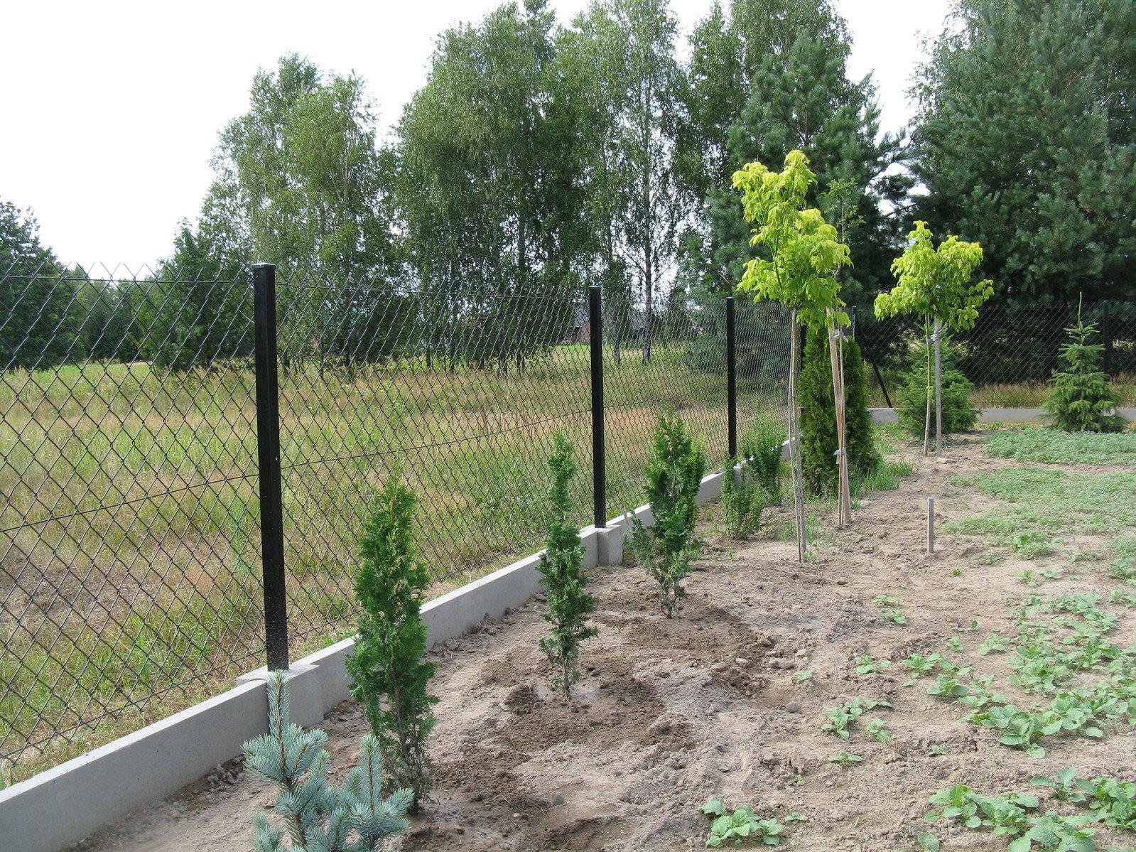 Roślin w ogrodzie mniej niż chwastów