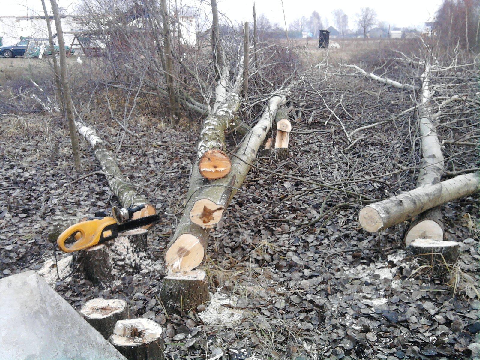 ścinka drzew