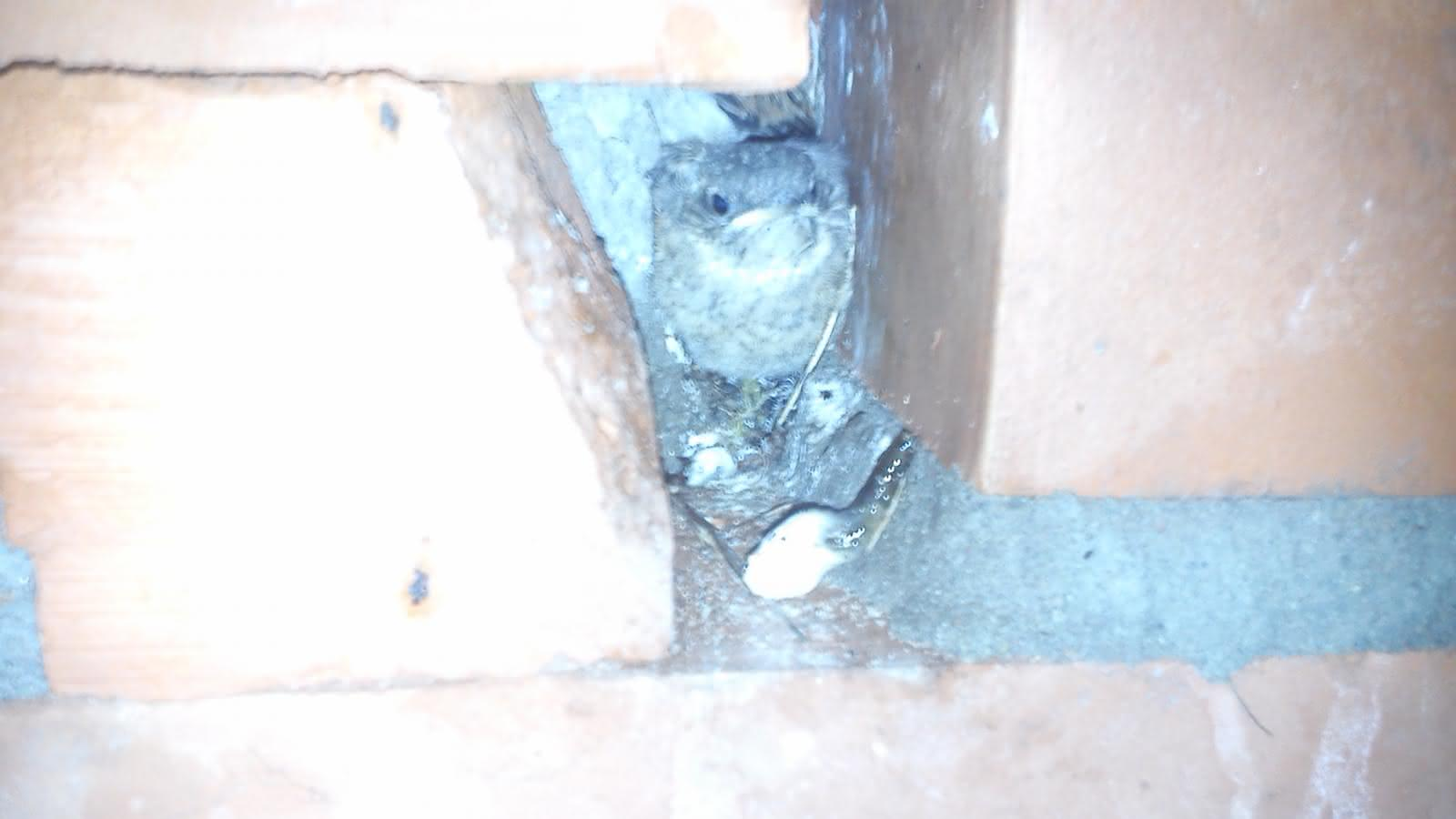 ptaki w kominie