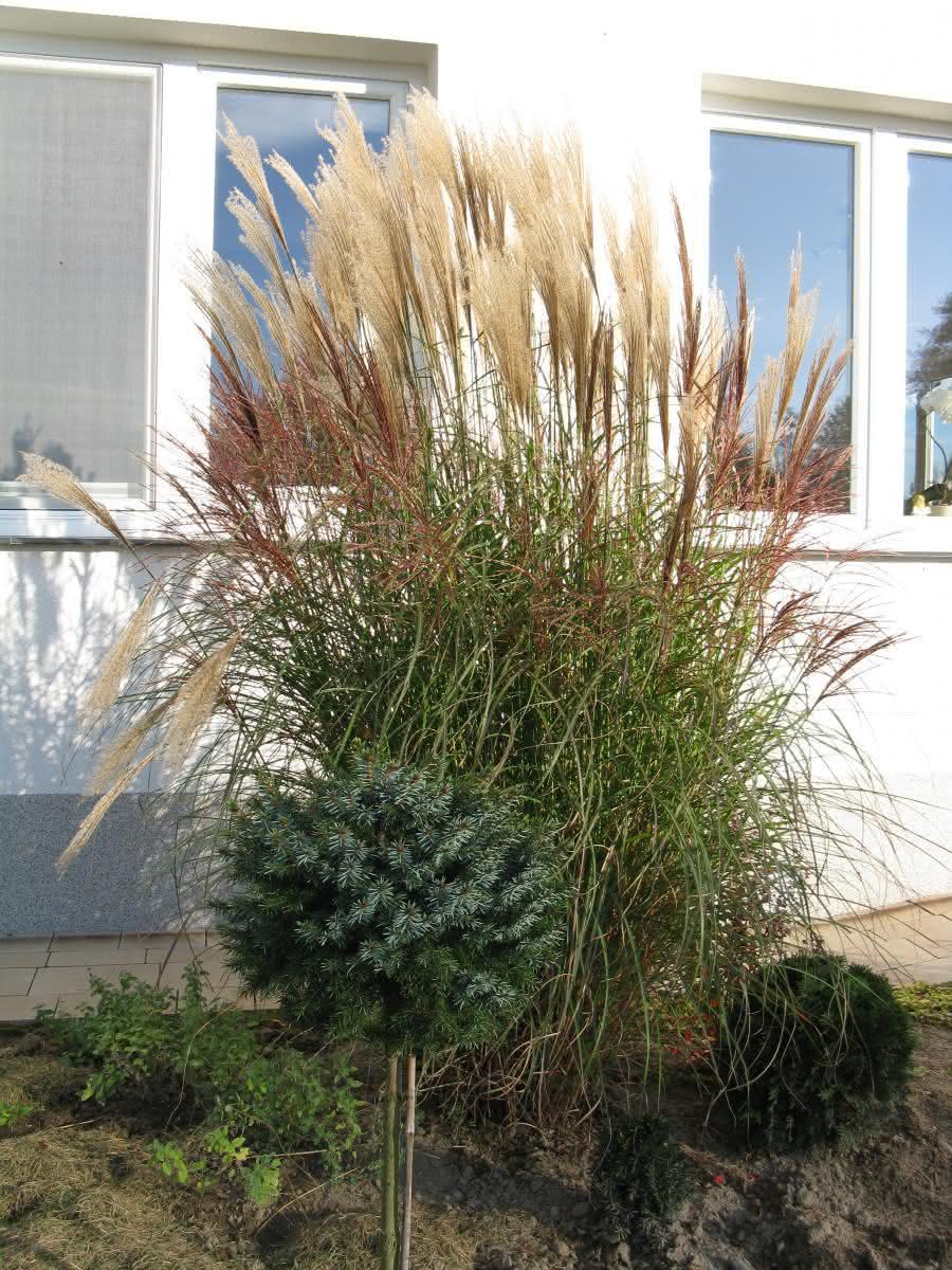 Jesienią najładniejsze trawy