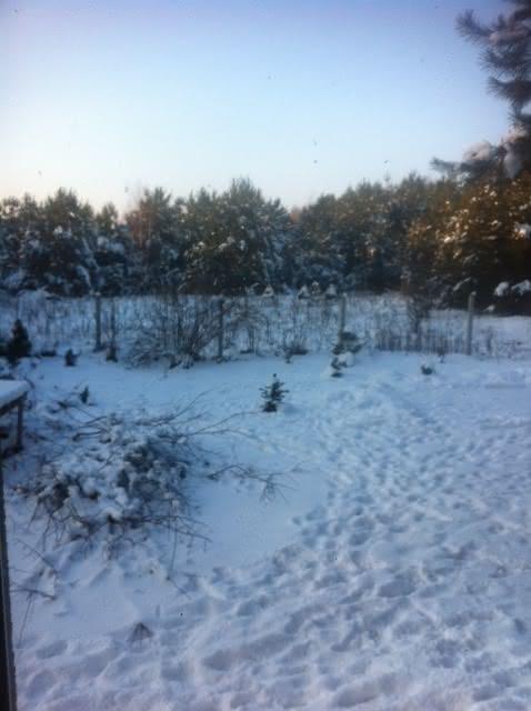 zima2016_pn-zach.JPG