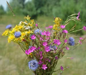 kwiatki polne.jpg