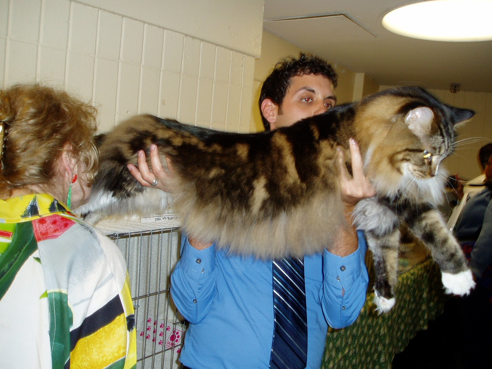 25528d1218908478-picture-thread-nh-maine-coon.jpg