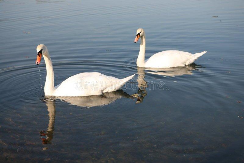 jezioro-%C5%82ab%C4%99dzie-2-309398.jpg