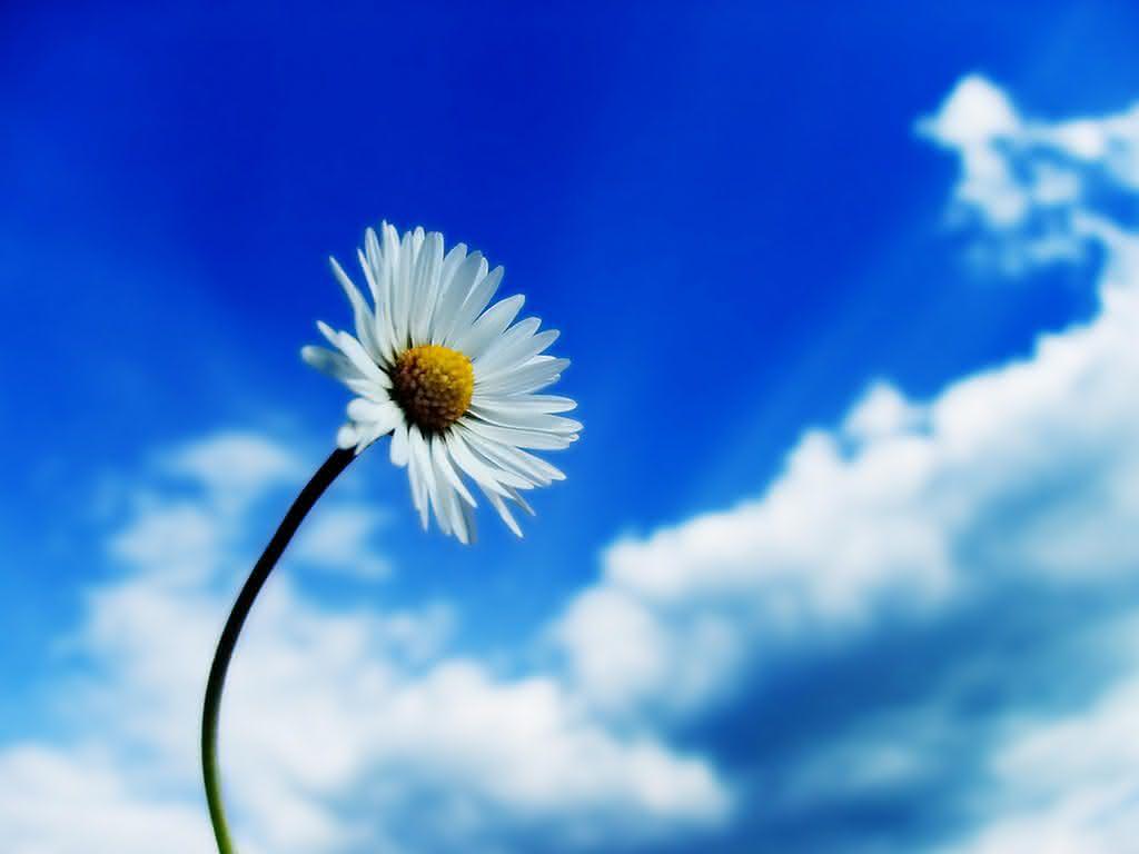 893_kwiat_i1.jpg