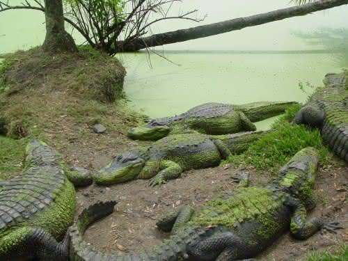 swamp09.jpg
